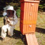 pasieka i pszczelarz